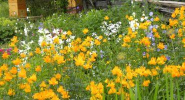 jardin-abondance